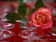 Hochzeitsfotograf - Rose